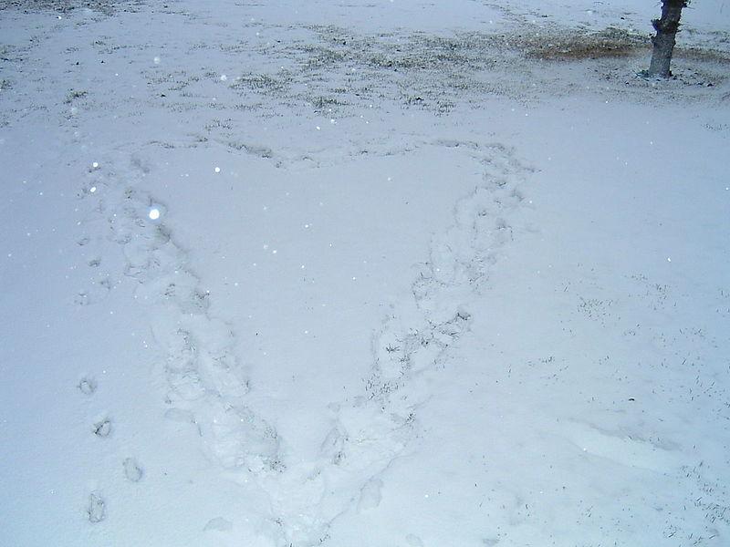 Snow 6 11 08