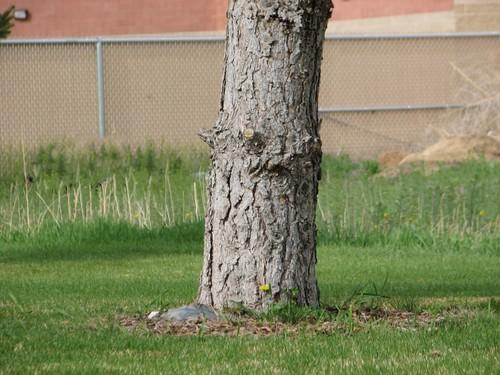 Treepee1_2