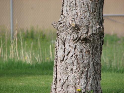 Treepee2