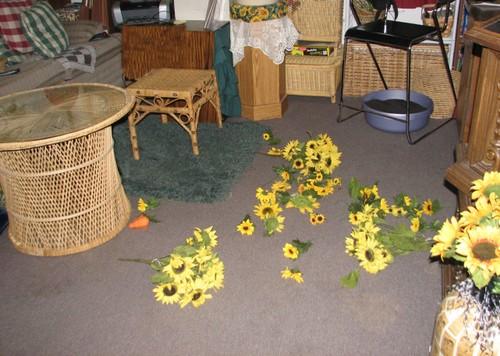Sunflowersthrewup