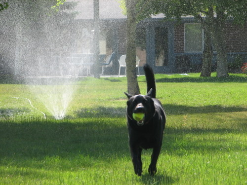 Sprinkler4