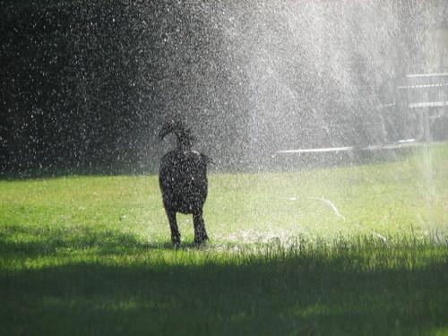 Sprinkler8_2