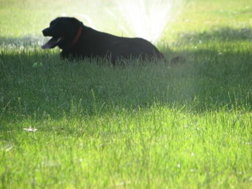 Sprinkler9
