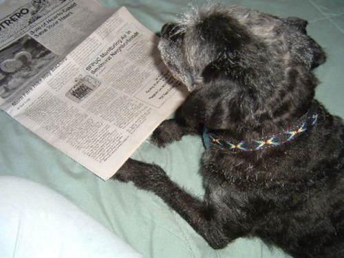 Jeffreadingnewspaper