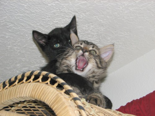 Screamingcat