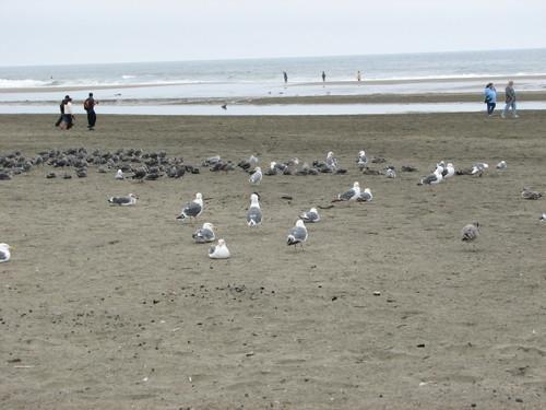 Beach1_1