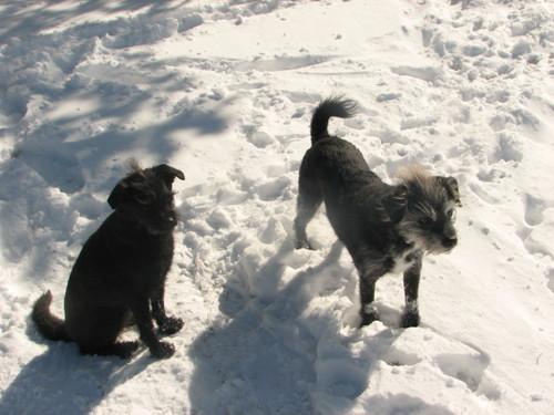 Bothdogs