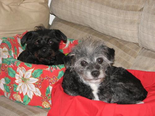 Christmas2006dogs