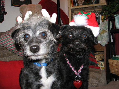 Christmasdogs2006_1