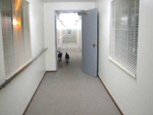 Dog_space_walk_5