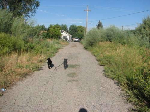 Dogwalking1