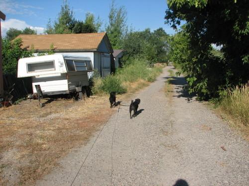 Dogwalking2