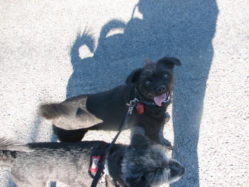 Dogwalking4