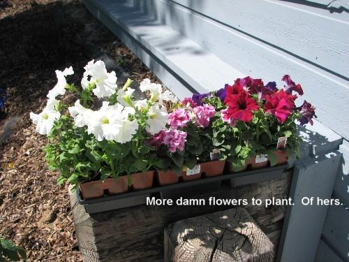 Moreflowersplant