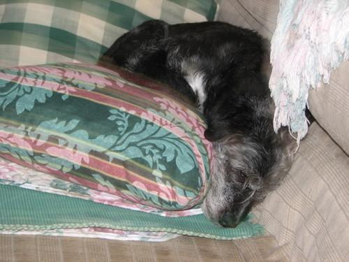Pillowsleeping