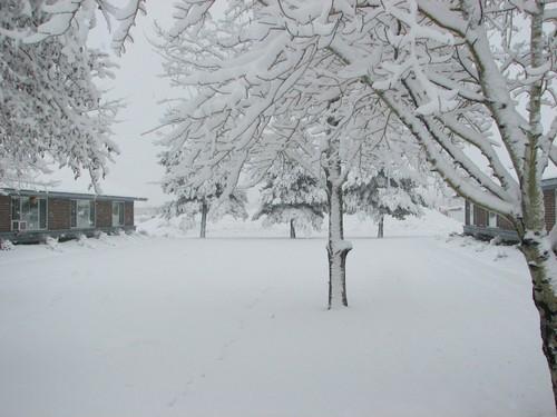 Snowinspring1_1