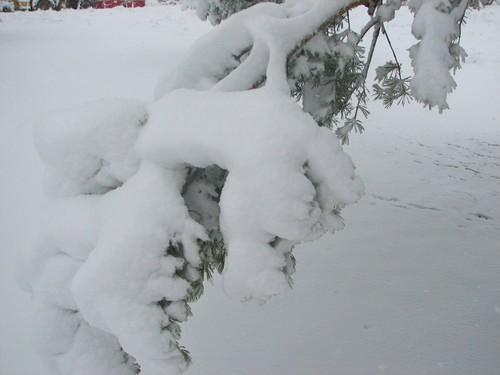 Snowinspring2