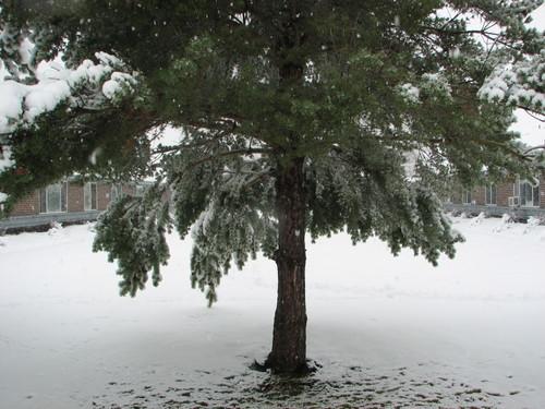 Snowinspring3