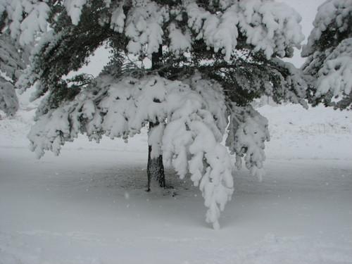 Snowinspring4