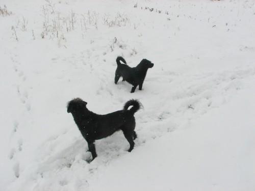 Snowstillhere2