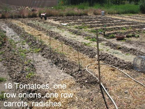 Tomatoesonions