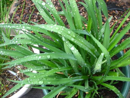 Wet_1